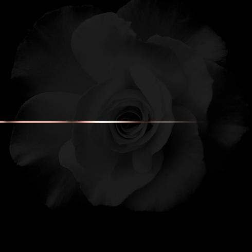 k roosevelt rosegold